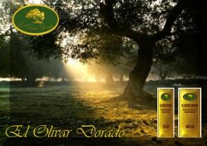 Anuncios aceite de oliva, virgen extra, calidad de oro, olivo, olivar oro